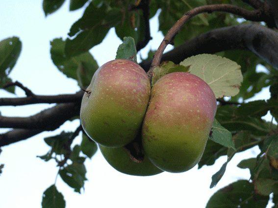 mela-rosa-montefelto-w